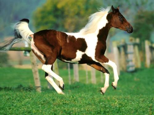 relincho caballo
